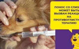 Понос у собаки лекарства