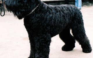 Русские собаки породы название