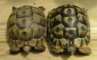 К какому виду относятся черепахи