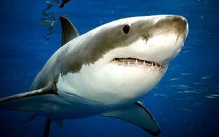 Ареал обитания акул на карте мира