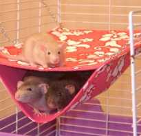 Гамак для крысы фото