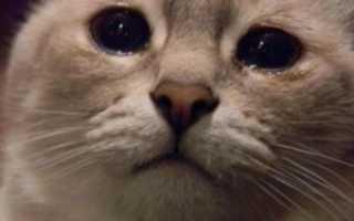 У кота очень сильно слезятся глаза
