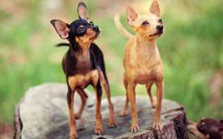 Беспроблемные породы собак