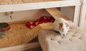 Домик или клетка для морской свинки: как сделать своими руками