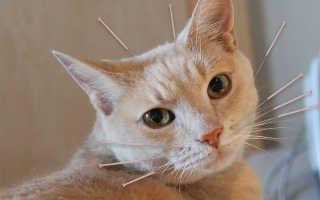 Парализованного котенка лечили иглоукалыванием, результаты превзошли ожидания