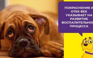Конъюнктивит у собаки чем лечить