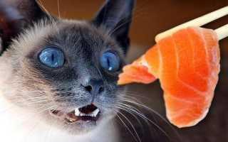 Корм для кошек без таурина