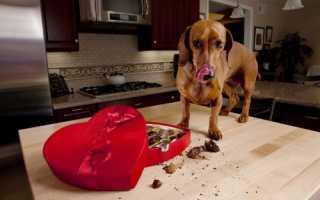 Чем отравить собаку быстро и безболезненно