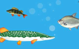 Рыбка с плохой памятью