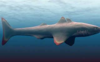 Название древней акулы
