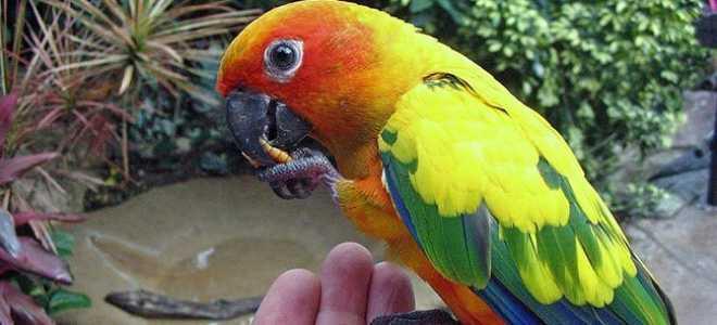 Попугай солнечный аратинга: виды, уход и содержание