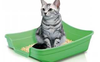 8 причин, почему кот или кошка перестали ходить в лоток: причины и что делать