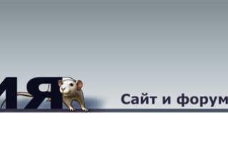 Купить крысу у заводчика в москве