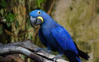 Сколько стоят говорящие попугаи цена
