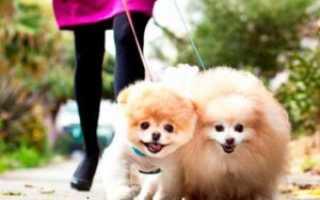 Самые милые породы собак в мире
