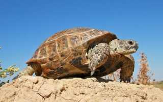 Сколько видов черепах существует в мире