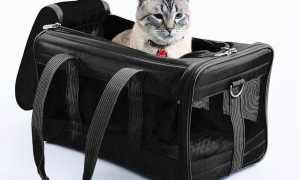 Переноска для кошек своими руками: как сделать и сшить, выкройки и порядок шитья