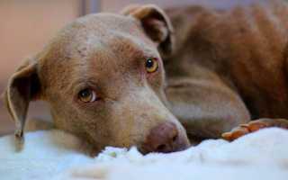 Дисплазия почек у собак