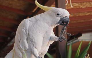 Попугай который говорит
