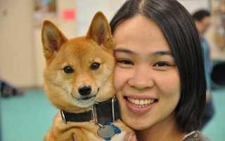 Порода собак сансю фото