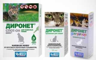 Диронет спот-он для кошек и котят: инструкция по применению