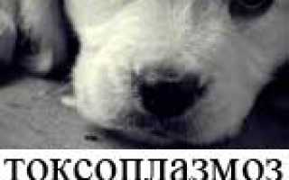 Токсоплазмоз у собак: симптомы и лечение