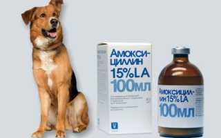 Амоксициллин собаке дозировка в таблетках