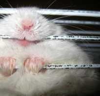 3 причины, почему хомяк грызет клетку: что делать, как отучить