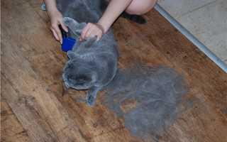 Чем вычесывать британского кота
