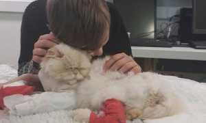 Кот в коме умирает