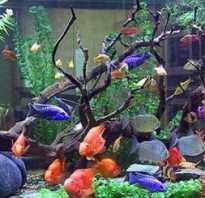 Какие бывают аквариумы для рыбок фото
