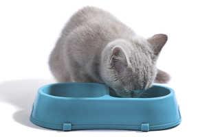 Что нельзя есть британским котятам