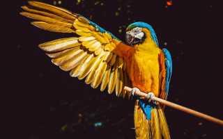 Ара попугай цена в россии