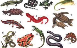 Змея это земноводное животное