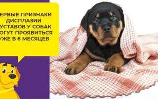Дисплазия у крупных собак