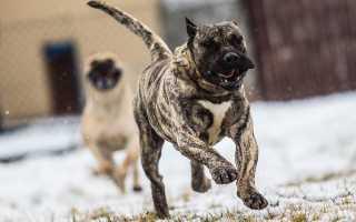 Особые породы собак