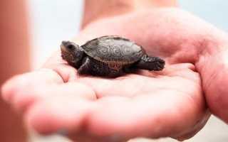 Домашние черепахи виды фото