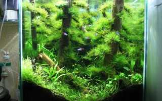 Сосновый бор в аквариуме — имитация леса!