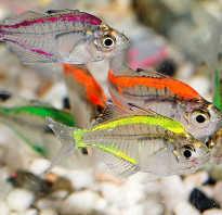 Аквариумные рыбы оранжевый