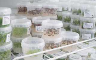 Каталог меристемных аквариумных растений ТМ Акварюмка