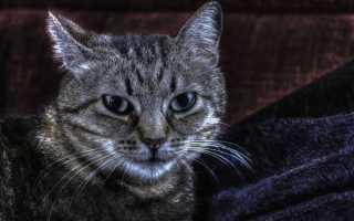Болезни кошек симптомы таблица и лечение