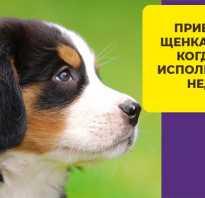 Нобивак рабиес: инструкция по применению вакцины от бешенства для кошек и собак