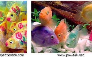 Искусственно окрашенные аквариумные рыбки