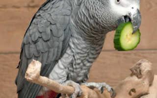 Жидкие витамины для волнистых попугаев