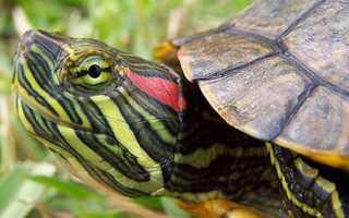 Домик для водной черепахи