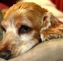Глистогонные таблетки для собак