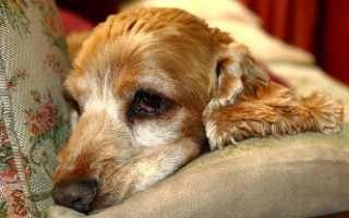 Таблетки против глистов для собак