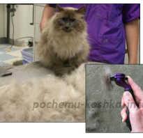 Фурминатор для кошек: спискок 4 лучших, какой выбрать, советы
