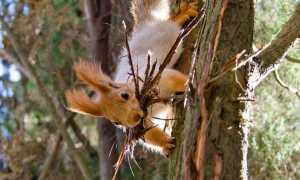 Белки в дикой природе видео