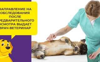 МРТ собаке: как делать МРТ головы и позвоночника, где делать, как готовиться